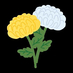 遺品整理用菊の花